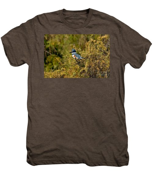 Belted Kingfisher Female Men's Premium T-Shirt by Anthony Mercieca