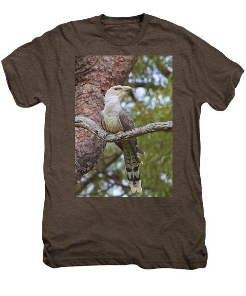 Channel-billed Cuckoo Fledgling Men's Premium T-Shirt by Martin Willis