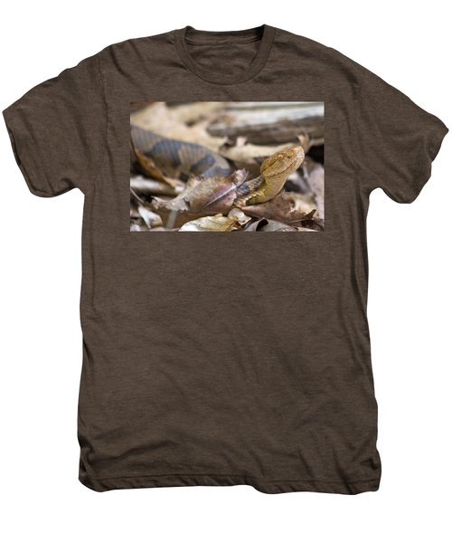 Copperhead In The Wild Men's Premium T-Shirt by Betsy Knapp