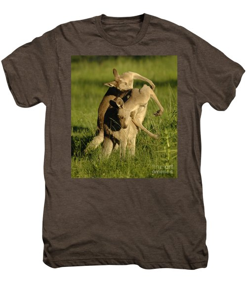 Kangaroos Taking A Bow Men's Premium T-Shirt by Bob Christopher
