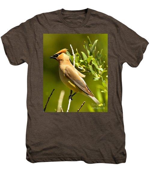 Cedar Waxwing Closeup Men's Premium T-Shirt by Adam Jewell