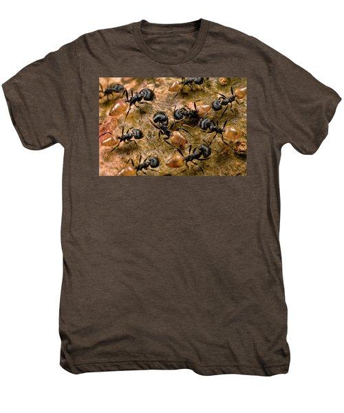 Ant Crematogaster Sp Group Men's Premium T-Shirt by Mark Moffett