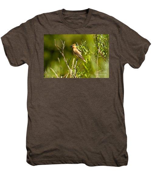 Cedar Waxwing At Glacier Men's Premium T-Shirt by Adam Jewell