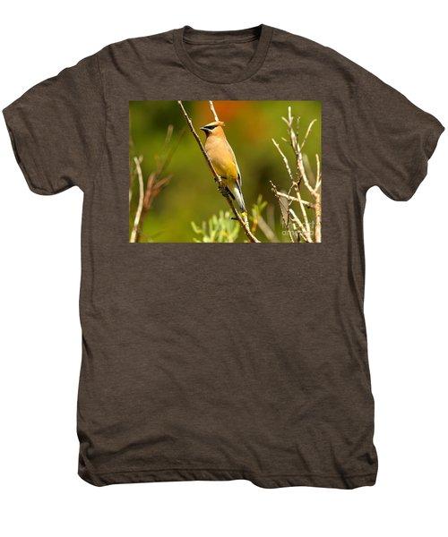 Glacier Cedar Waxwing Men's Premium T-Shirt by Adam Jewell