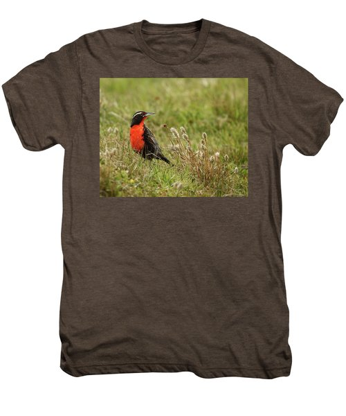 Long-tailed Meadowlark Men's Premium T-Shirt by Bruce J Robinson