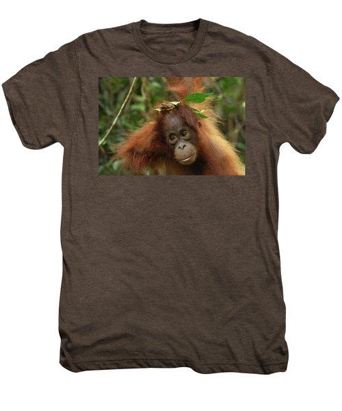 Orangutan Pongo Pygmaeus Baby, Camp Men's Premium T-Shirt by Thomas Marent
