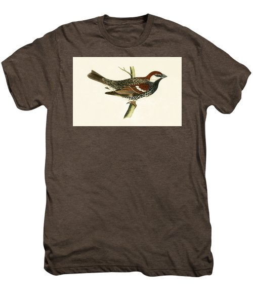 Spanish Sparrow Men's Premium T-Shirt by English School