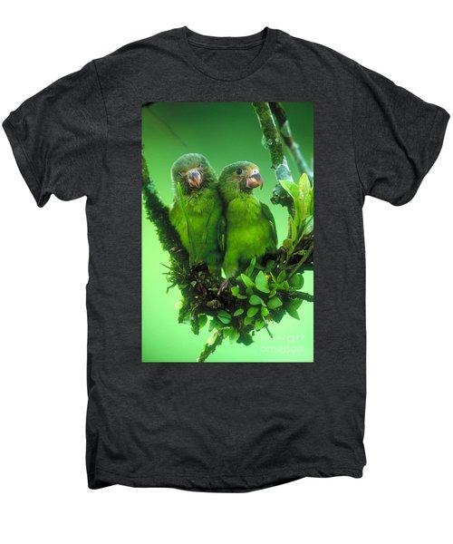 Cobalt-winged Parakeets Men's Premium T-Shirt by Art Wolfe