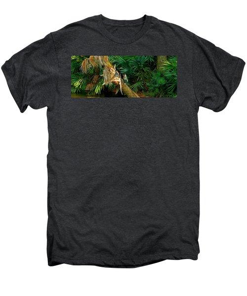 Anhinga Anhinga Anhinga On A Tree Men's Premium T-Shirt by Panoramic Images