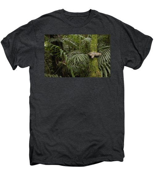 Boa Constrictor In The Rainforest Men's Premium T-Shirt by Pete Oxford