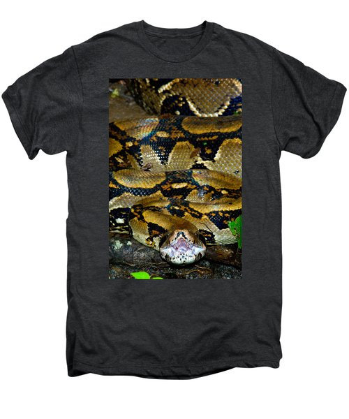 Close-up Of A Boa Constrictor, Arenal Men's Premium T-Shirt by Panoramic Images