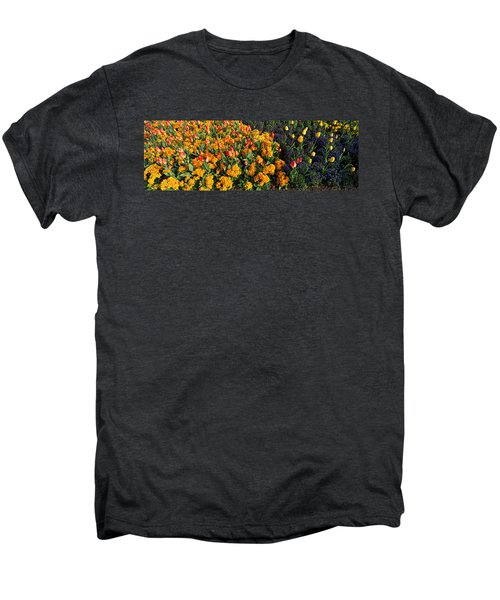 Flowers In Hyde Park, City Men's Premium T-Shirt by Panoramic Images