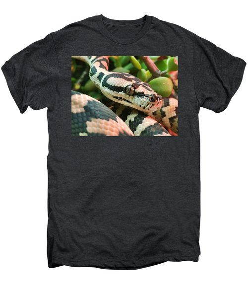Jungle Python Men's Premium T-Shirt by Kelly Jade King