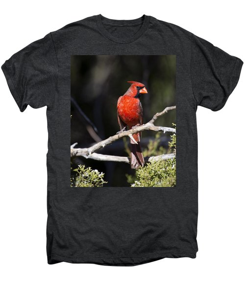 Male Northern Cardinal Men's Premium T-Shirt by Gary Langley