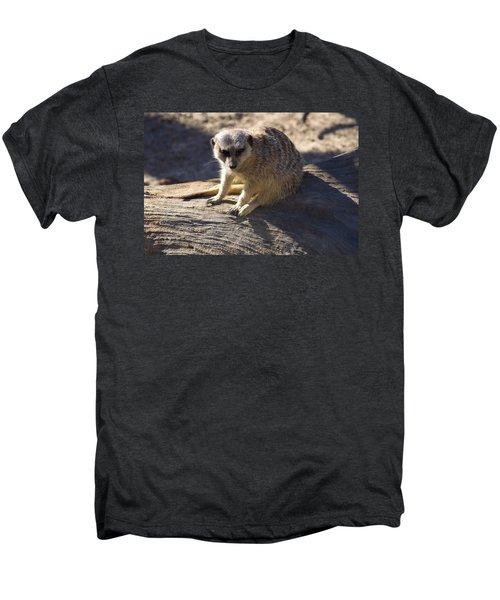 Meerkat Resting On A Rock Men's Premium T-Shirt by Chris Flees