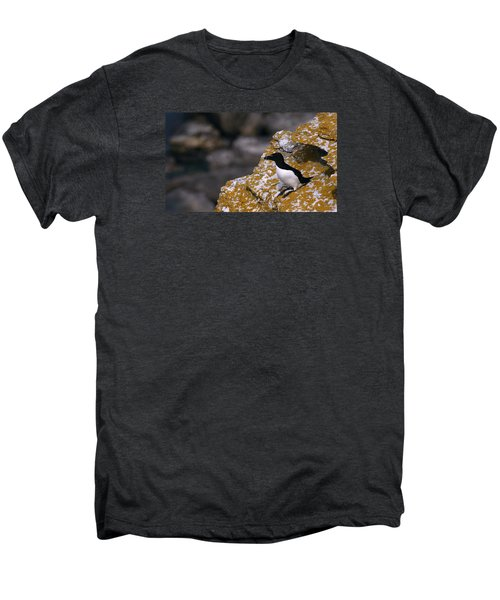 Razorbill Bird Men's Premium T-Shirt by Dreamland Media