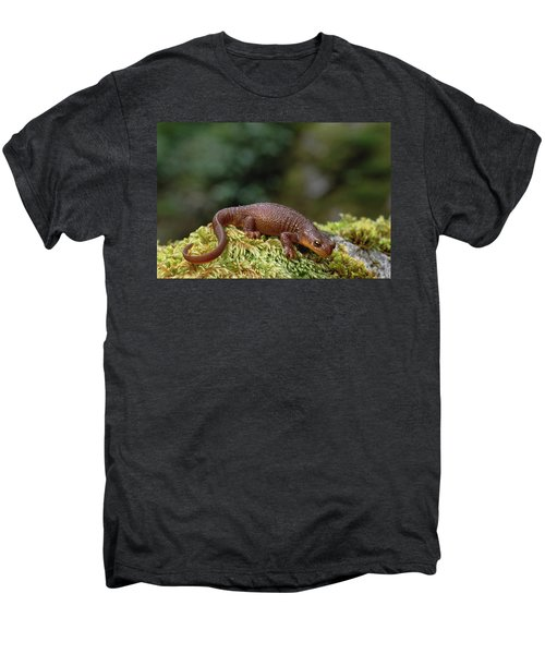 Rough-skinned Newt Oregon Men's Premium T-Shirt by Gerry Ellis