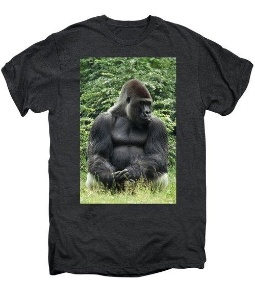 Western Lowland Gorilla Male Men's Premium T-Shirt by Konrad Wothe