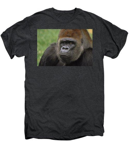 Western Lowland Gorilla Silverback Men's Premium T-Shirt by Gerry Ellis