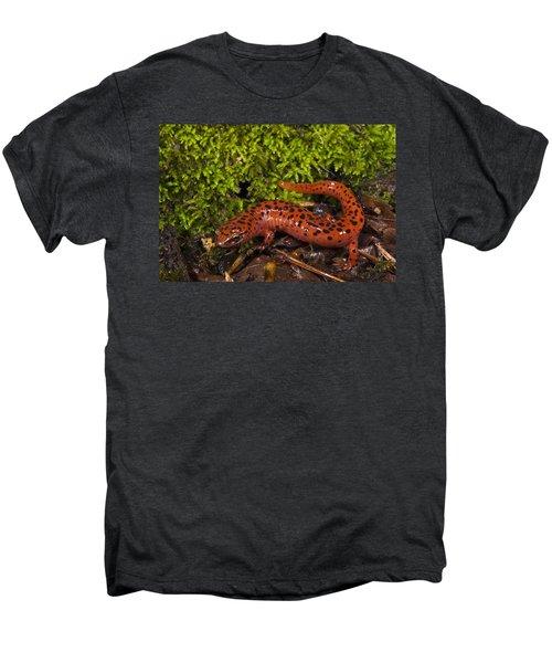 Red Salamander Pseudotriton Ruber Men's Premium T-Shirt by Pete Oxford