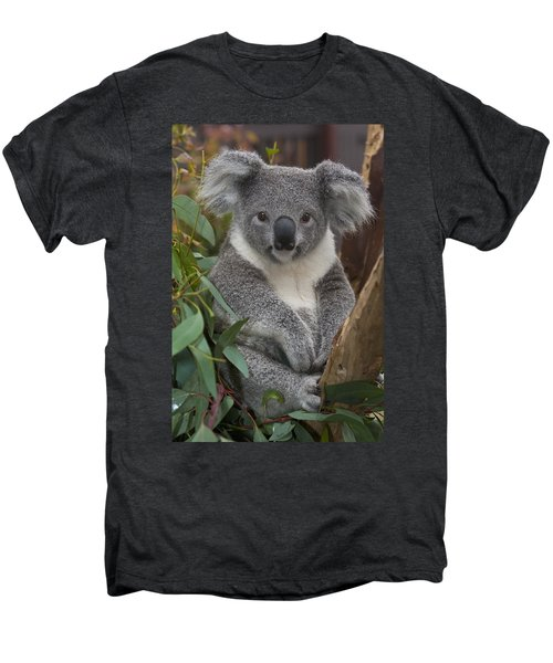 Koala Phascolarctos Cinereus Men's Premium T-Shirt by Zssd