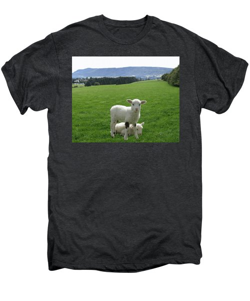 Lambs In Pasture Men's Premium T-Shirt by Dominic Yannarella
