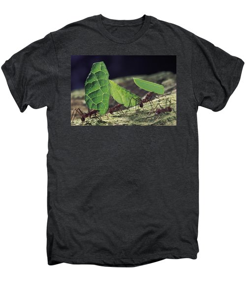 Leafcutter Ant Atta Cephalotes Workers Men's Premium T-Shirt by Mark Moffett