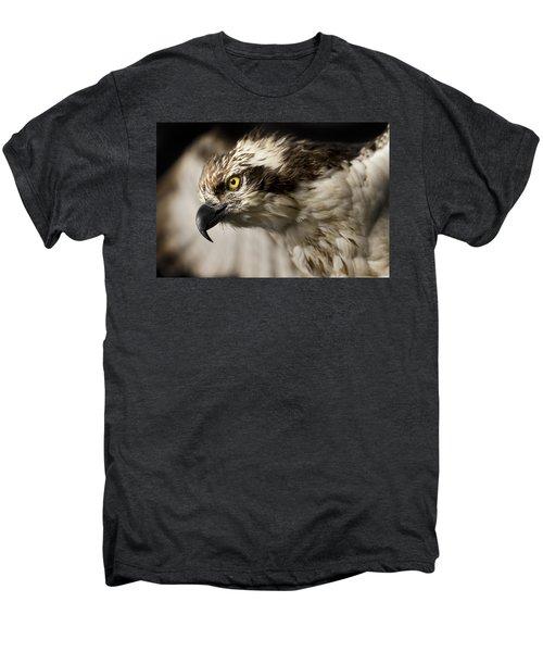 Osprey Men's Premium T-Shirt by Adam Romanowicz