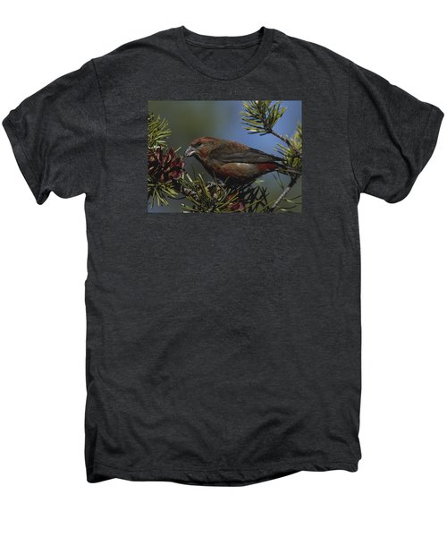 Red Crossbill Feeds On Pine Cone Seeds Men's Premium T-Shirt by Mark Wallner