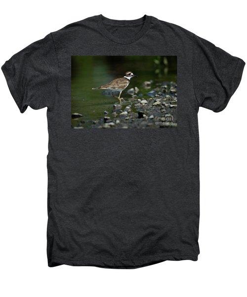 Killdeer  Men's Premium T-Shirt by Douglas Stucky