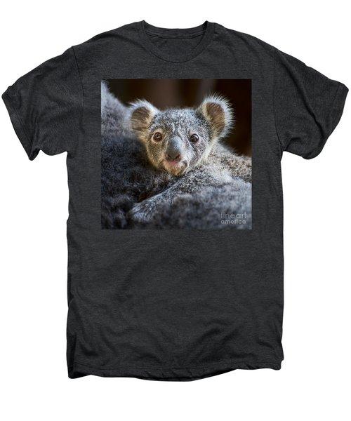 Up Close Koala Joey Men's Premium T-Shirt by Jamie Pham