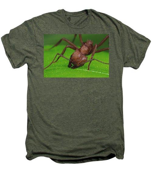 Leafcutter Ant Cutting Papaya Leaf Men's Premium T-Shirt by Mark Moffett