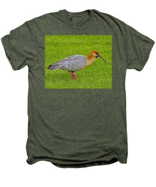 Black-faced Ibis Men's Premium T-Shirt by Tony Beck