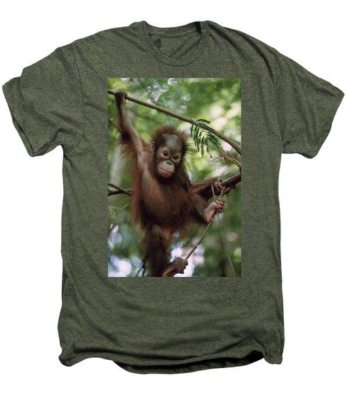 Orangutan Infant Hanging Borneo Men's Premium T-Shirt by Konrad Wothe