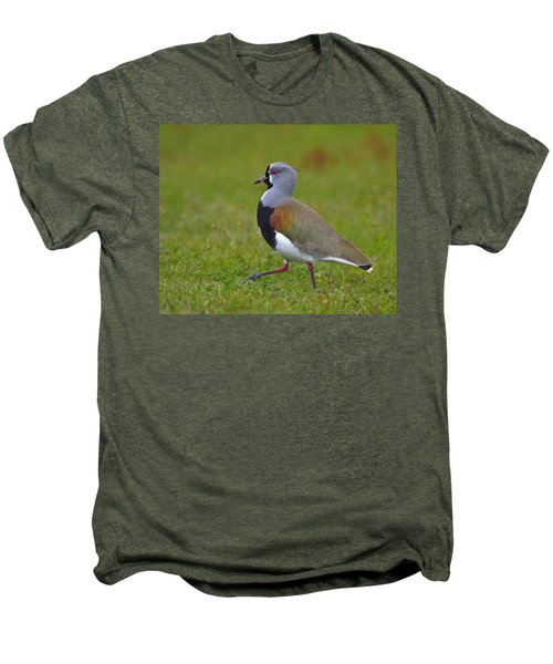 Strutting Lapwing Men's Premium T-Shirt by Tony Beck