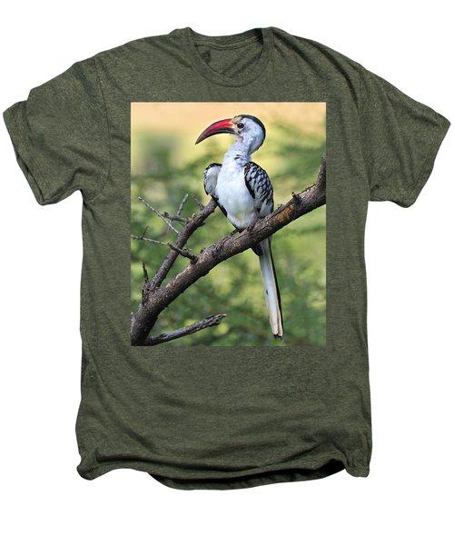 Red-billed Hornbill Men's Premium T-Shirt by Tony Beck