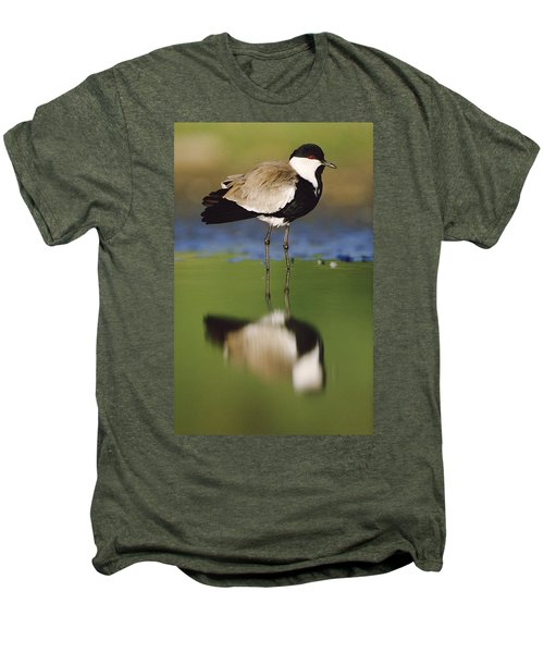 Spur Winged Plover With Its Reflection Men's Premium T-Shirt by Tim Fitzharris