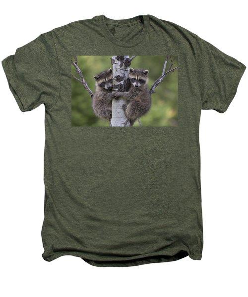 Raccoon Two Babies Climbing Tree North Men's Premium T-Shirt by Tim Fitzharris