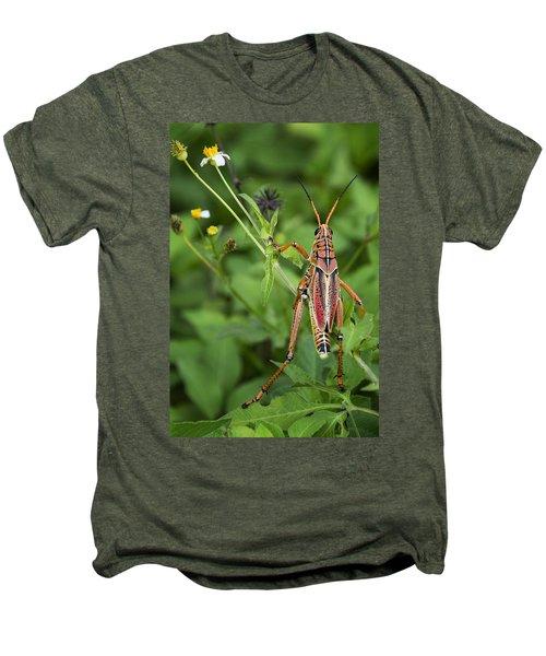 Eastern Lubber Grasshopper  Men's Premium T-Shirt by Saija  Lehtonen