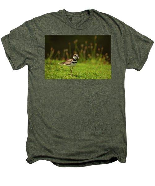 Killdeer Men's Premium T-Shirt by Karol Livote