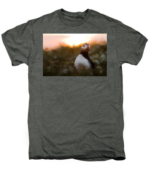 Atlantic Puffin At Sunrise Skomer Men's Premium T-Shirt by Sebastian Kennerknecht