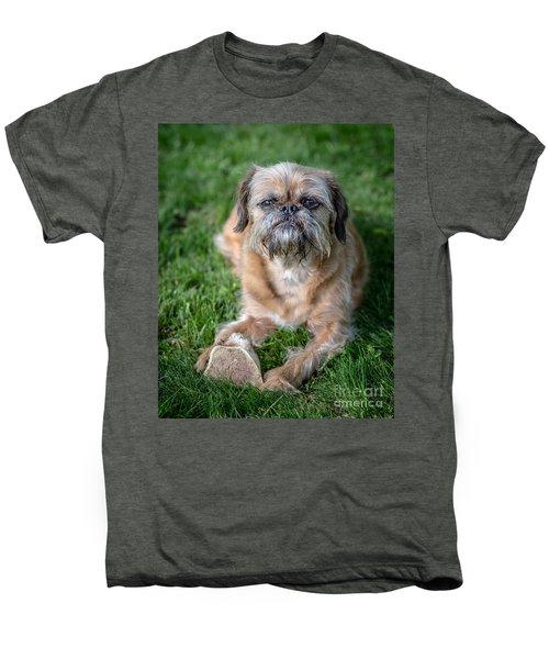 Brussels Griffon Men's Premium T-Shirt by Edward Fielding