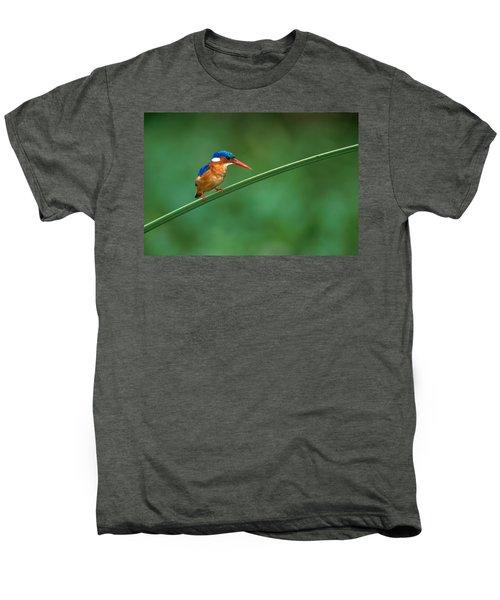 Malachite Kingfisher Tanzania Africa Men's Premium T-Shirt by Panoramic Images