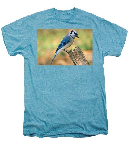 Blue Jay Men's Premium T-Shirt by Millard H. Sharp