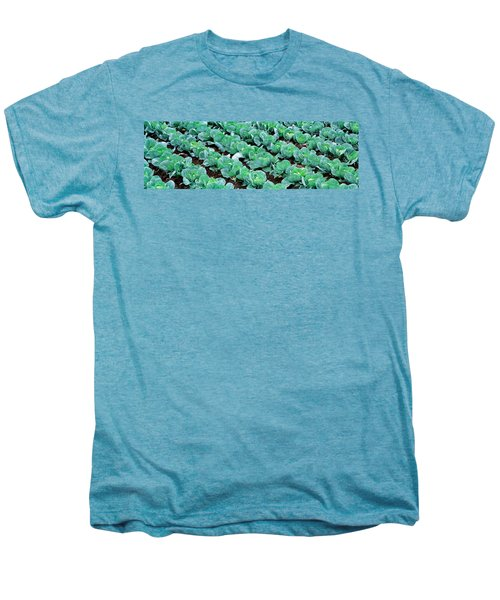 Cabbage, Yamhill Co, Oregon, Usa Men's Premium T-Shirt by Panoramic Images
