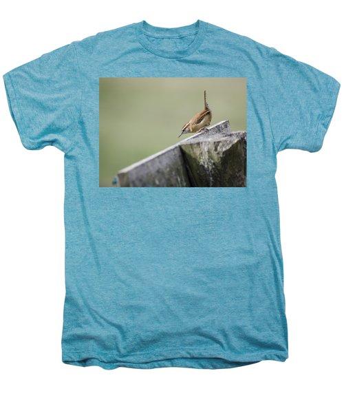 Carolina Wren Two Men's Premium T-Shirt by Heather Applegate