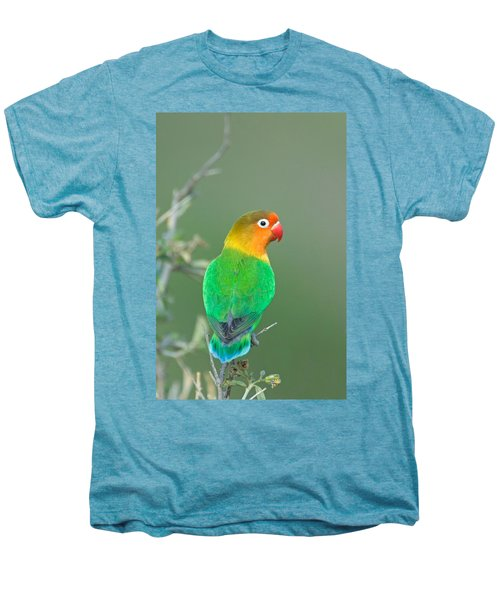 Close-up Of A Fischers Lovebird Men's Premium T-Shirt by Panoramic Images