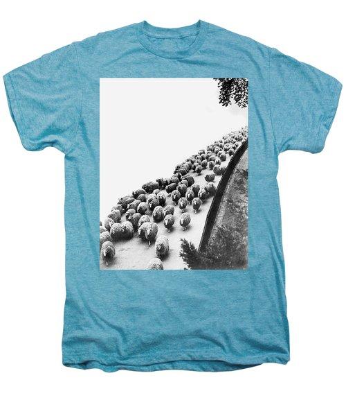 Hyde Park Sheep Flock Men's Premium T-Shirt by Underwood Archives