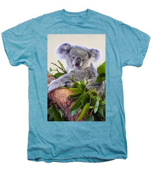 Koala On Top Of A Tree Men's Premium T-Shirt by Chris Flees
