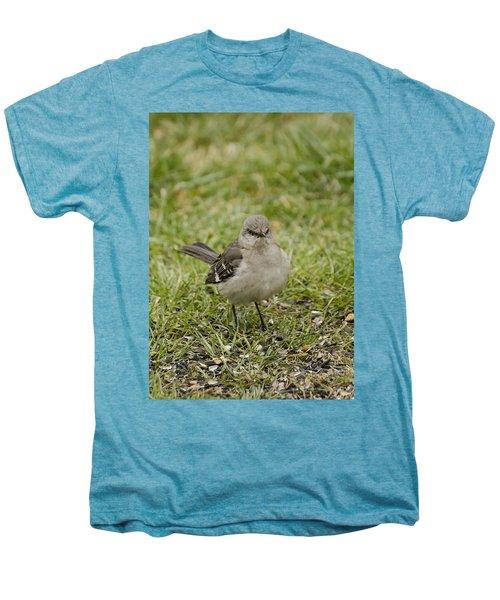 Northern Mockingbird Men's Premium T-Shirt by Heather Applegate